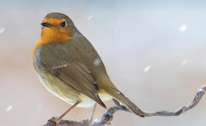 Oefenen voor de Nationale Vogeltelling
