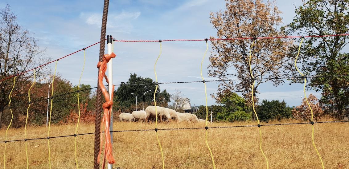 De schaapjes op het droge